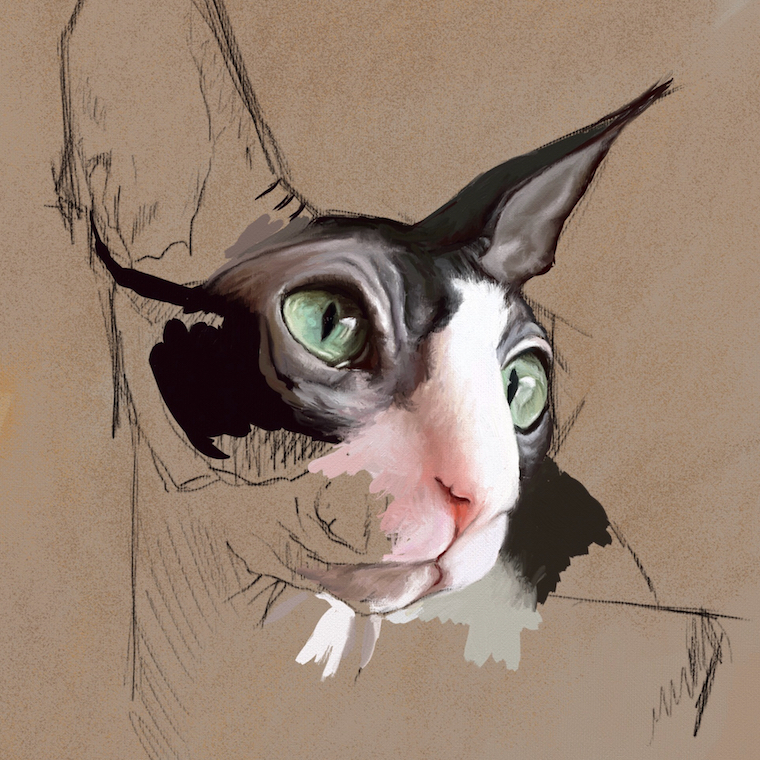 How To Paint A Hairless Sphynx Cat In Oil Step-By-Step